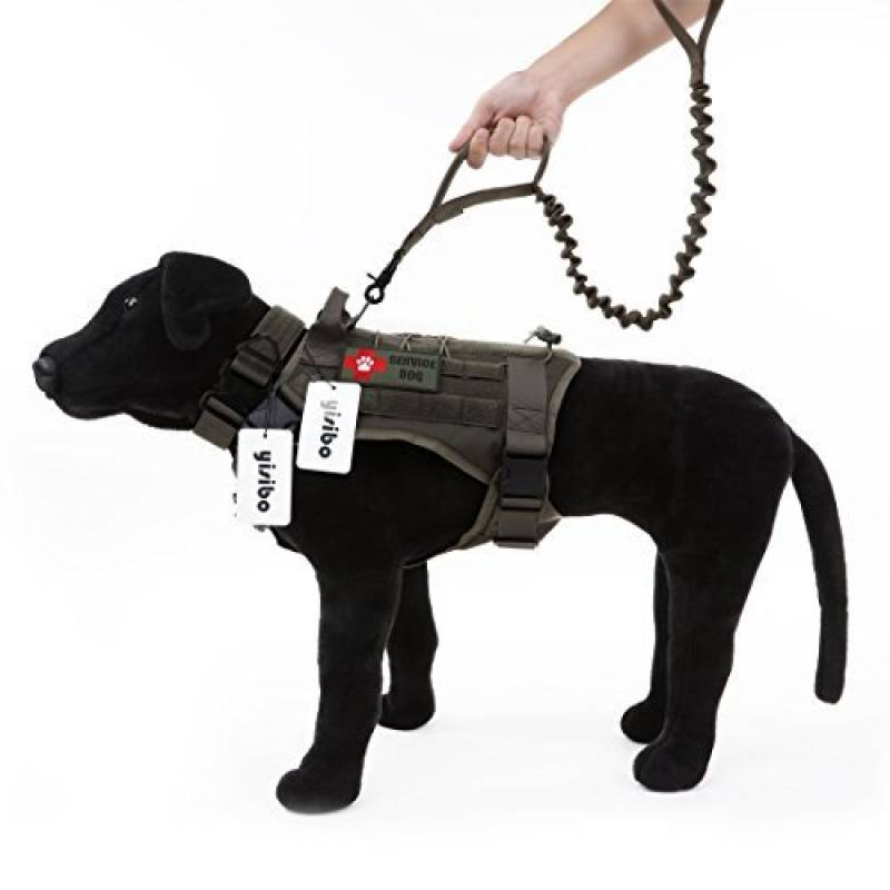 harnais chien chasse